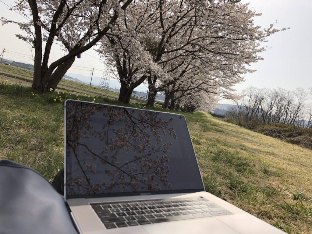 桜の木の下ノマド1