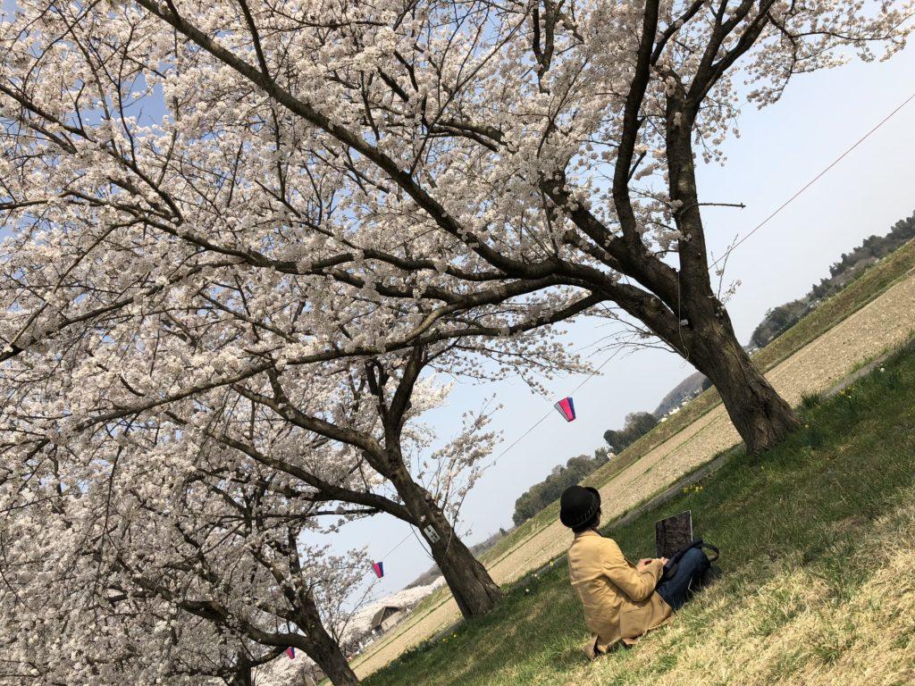 桜の木の下ノマド2
