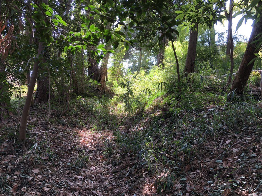 森の中ノマド2