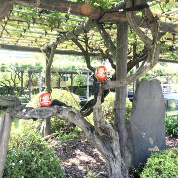 木に乗るダルマ2