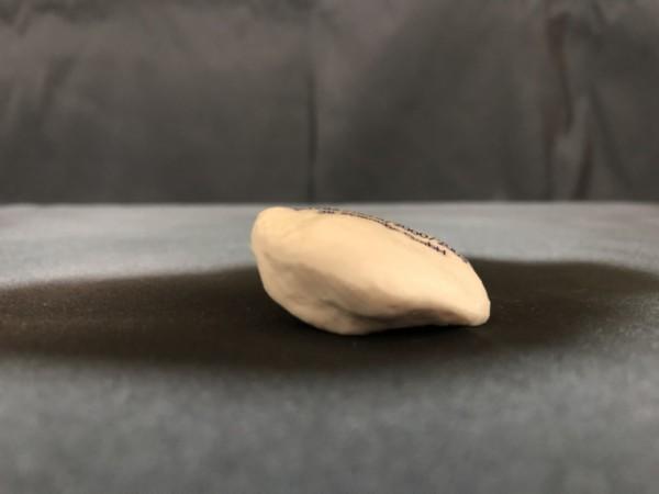 ひざの模型(側面)